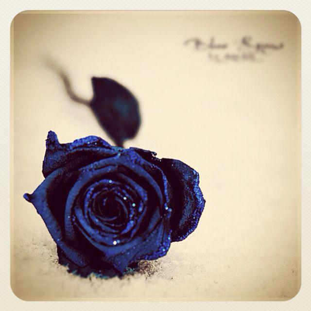 Blue Rose!