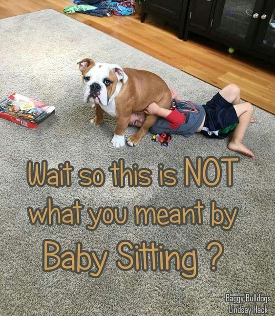#funnybulldog