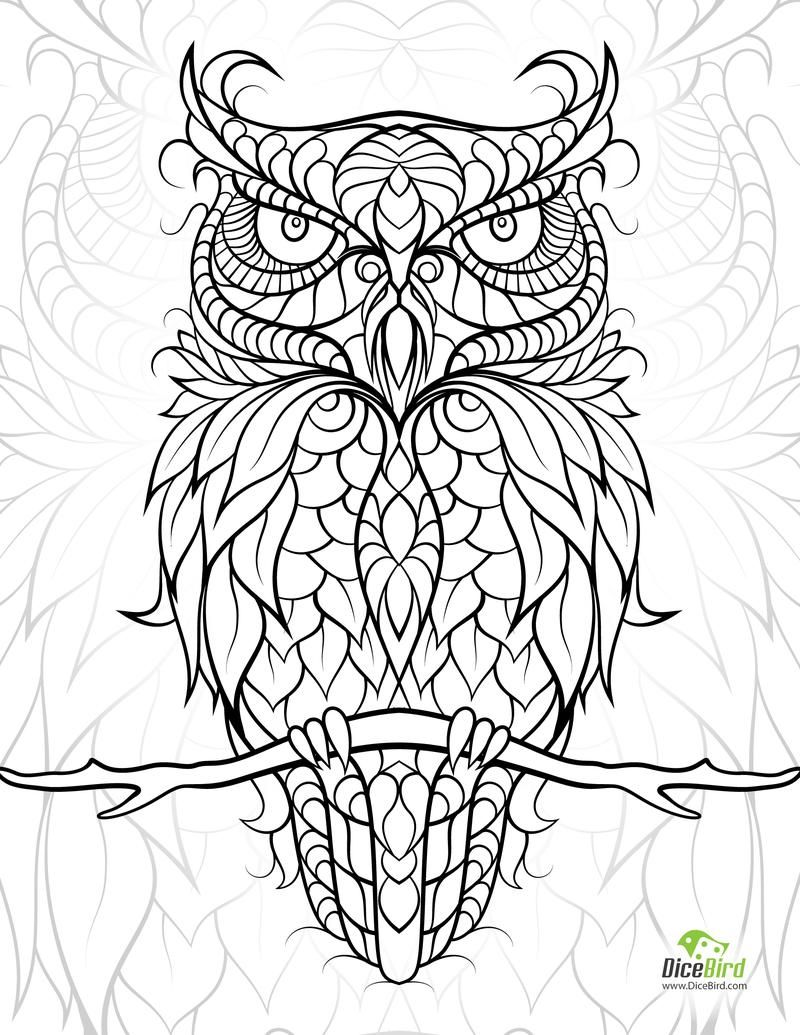 DiceOwl Dicebird Diceowl Free Printable Adult Coloring Pages
