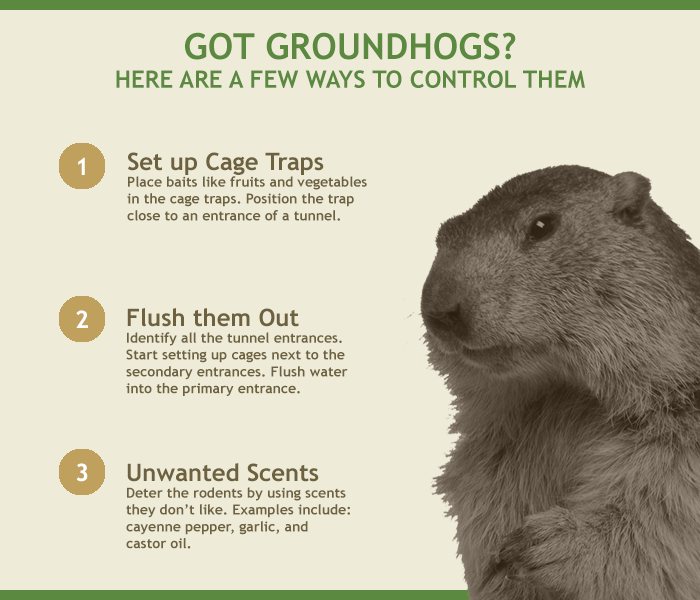 40ac1ce5eceae58bb506043faa789906 - How To Get Rid Of Groundhogs In Vegetable Garden