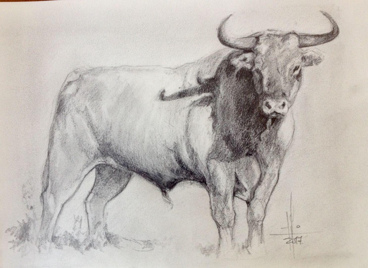Dibujo A Lapiz De Un Toro Por Francisco Javier Abellan Dibujos A