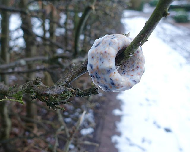 Winterfutter Für Vögel