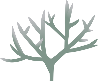 Sketch Coral Reef Google Search Coral Reef Coral