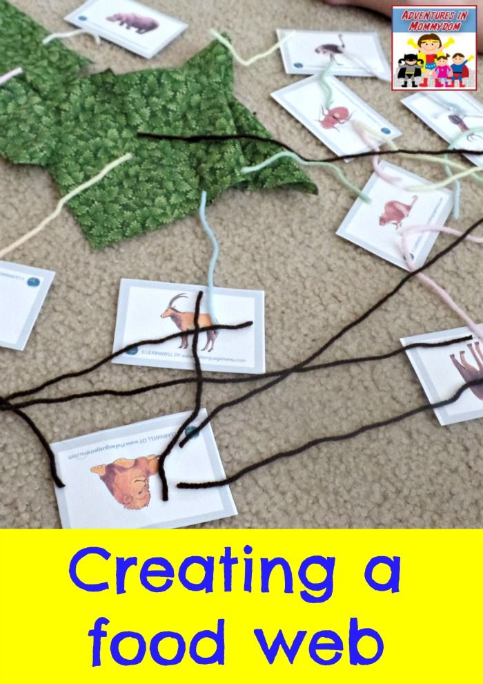 food web science activity adventures in mommydom pinterest food webs food and food chains