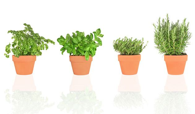 Several herbs