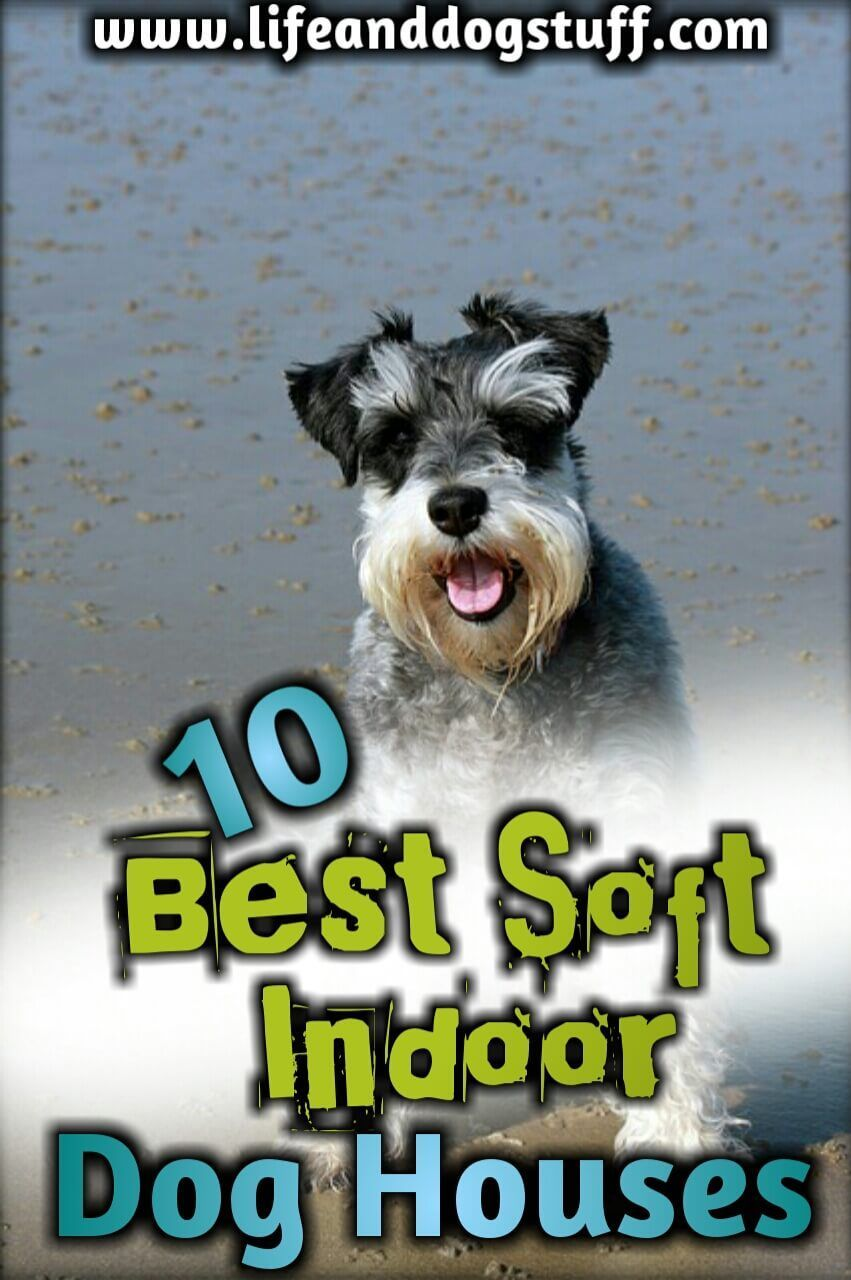 10 Best Soft Indoor Dog Houses For Small Dogs Dog Houses Cute