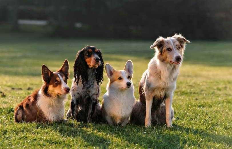 Pin On Pets Animals