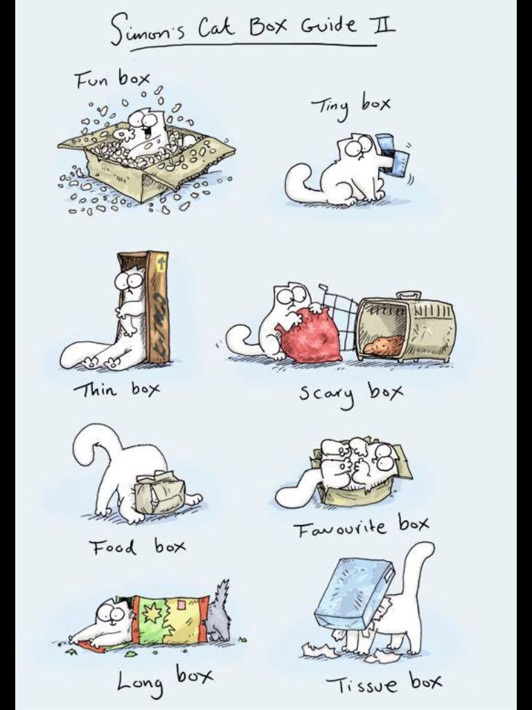 Simons cat in box. cats funny cat humor cute quotes