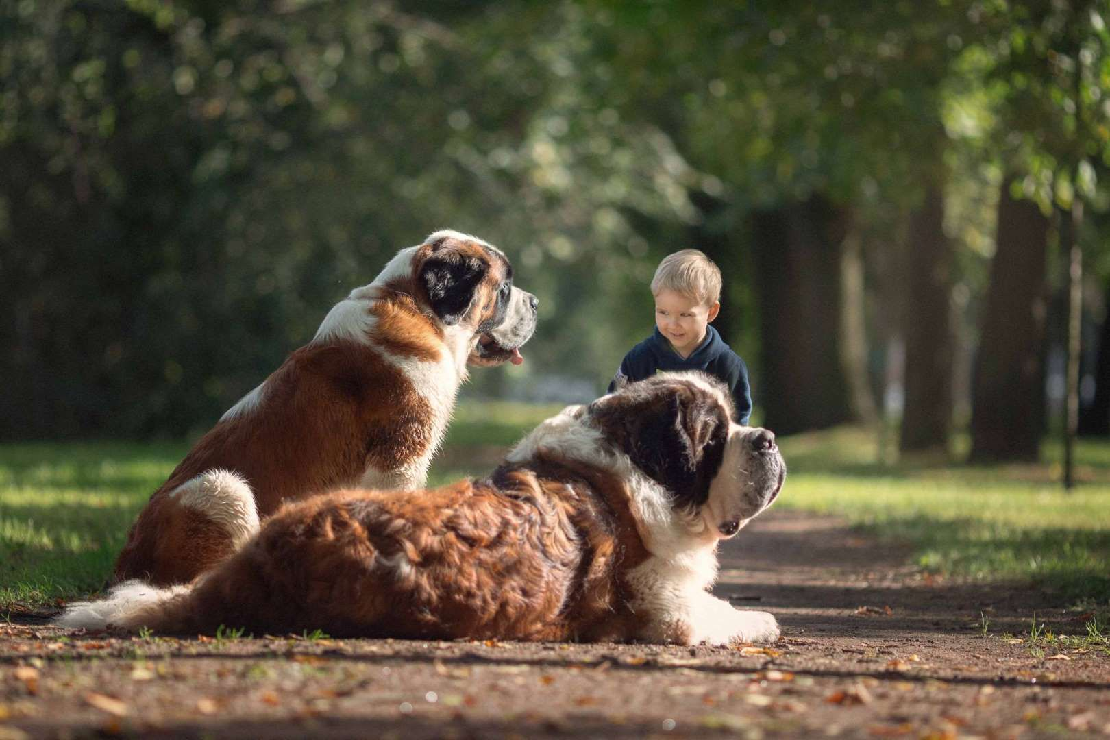 Little Kids And Their Big Dogs Andy Seliverstoff My O My Pics - Tiny children and their huge dogs photographed in adorable portraits by andy seliverstoff