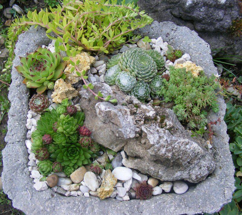 sempervivum im hypertufa bilder und fotos selbermachen pinterest steingarten hauswurz. Black Bedroom Furniture Sets. Home Design Ideas