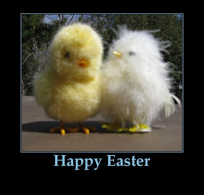 Happy Easter Pictures With Quotes: Happy Easter Chicks-funny Easter