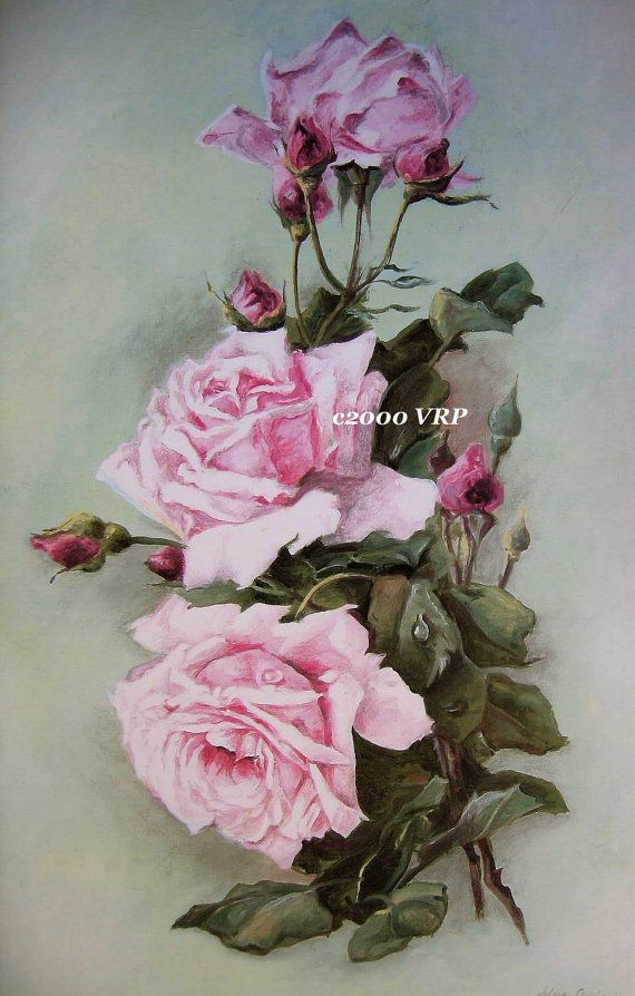Print FREE SHIP Pink Cabbage Roses CP81 by VictorianRosePrints, $10.99