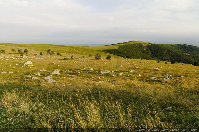 Herbe rase et cailloux au sommet du mont aigoual for Separation herbe cailloux