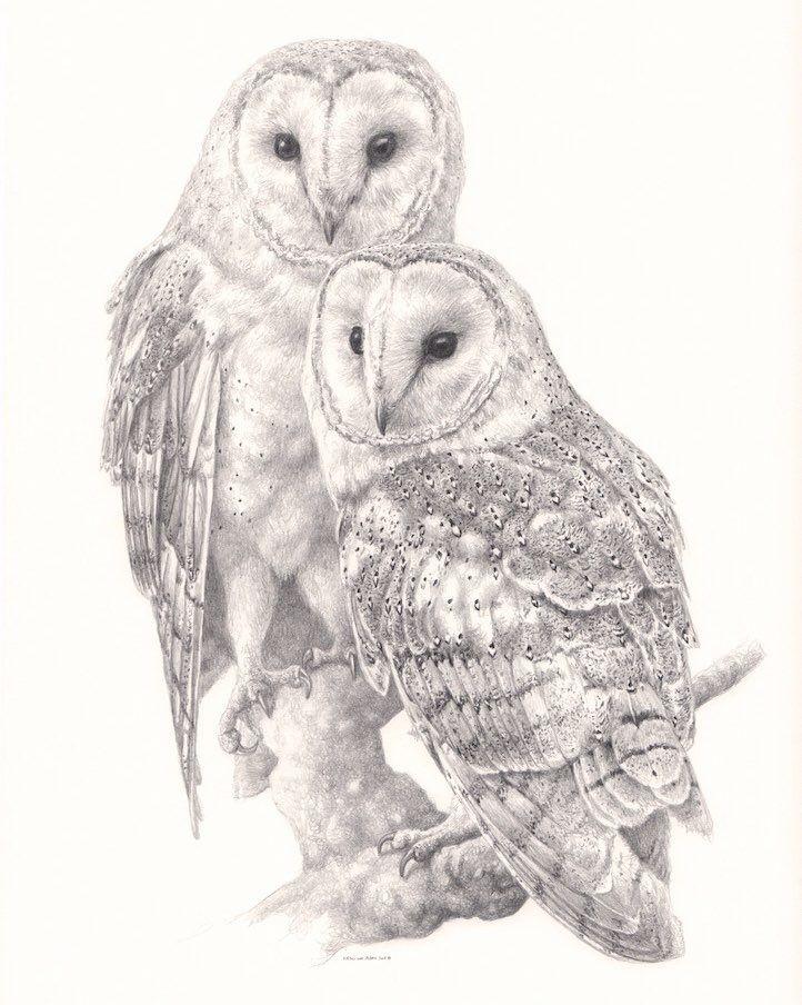 Barn Owl Couple Graphite pencil on Schoellershammer ...