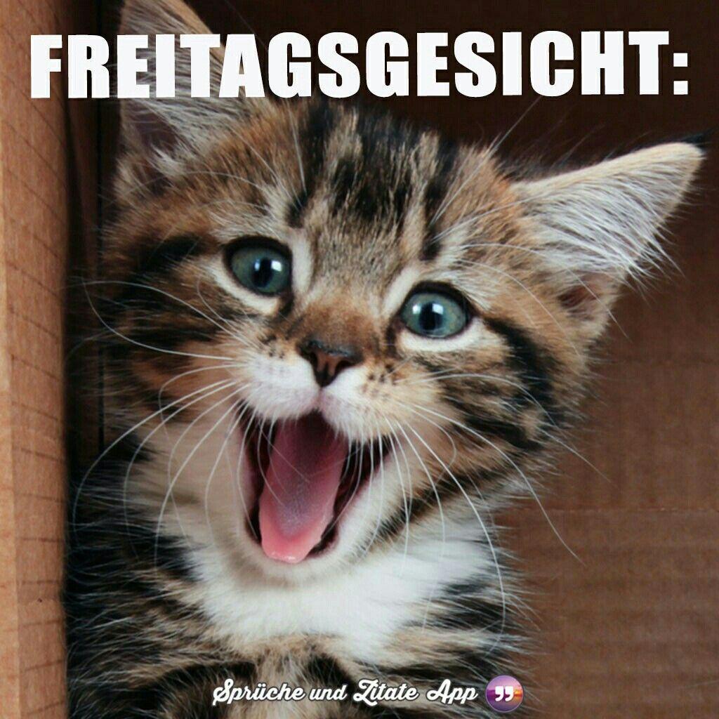 Katze Freitag
