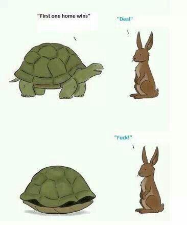 Turtle/Hare race