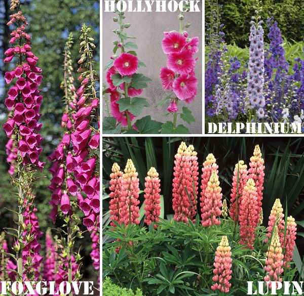 Good Landscaping Plants For Oklahoma Biennials Plant in spring