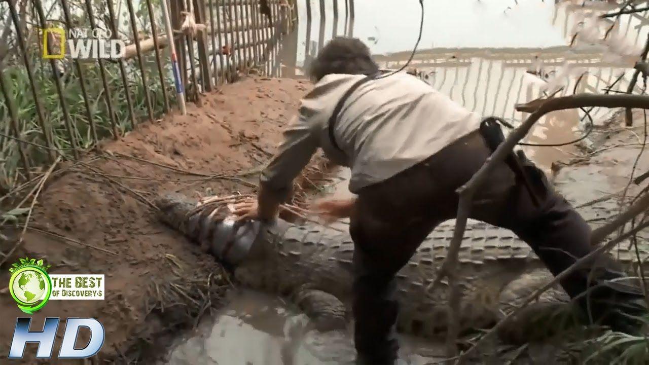 การไล่ล่าจระเข้ยักษ์ฆาตกรแห่งลุ่มแม่น้ำคองโกแอฟริกา | สารคดี สัตว์โลก