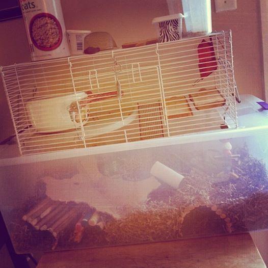 Access Denied Gerbil Cages Gerbil Hamster