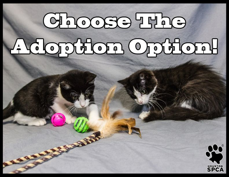 All Kittens And Cats At The Houston Spca Will Be Available To Approved Adopters For An Adoption Fee Of 10 From Sept Adoption Stories Adoption Options Adoption