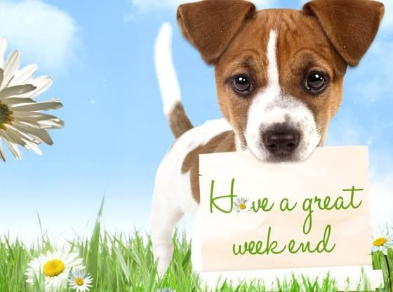 Happy Weekend my dear friends! I hope you all have had good weeks! It is so  good to be back with you:) Love you all!… | Weekend greetings, Friday dog,  Happy weekend