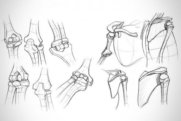 Anatomy Critiques – Types of Joints