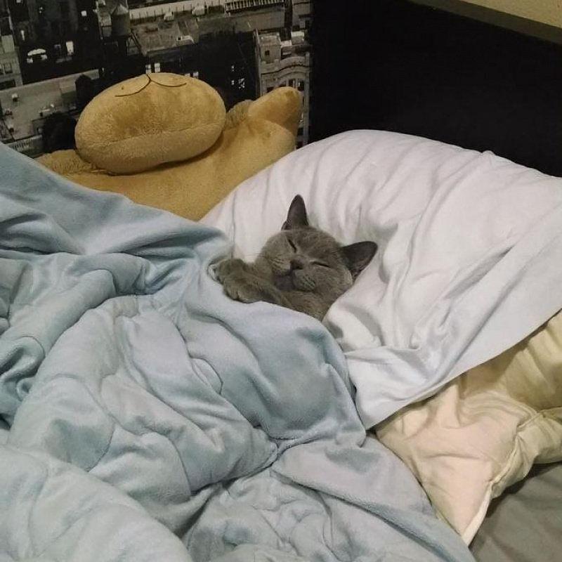 quand tu trimes au taf pour lui payer ses croquettes ton chat t 39 attends tranquillement la. Black Bedroom Furniture Sets. Home Design Ideas