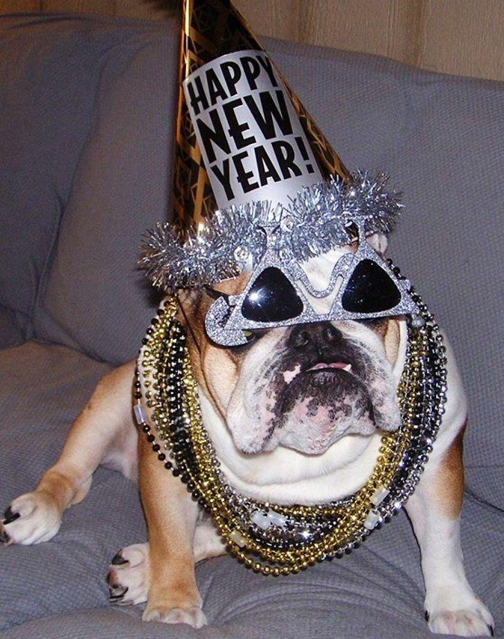 English Bulldog Bulldog Bulldog Funny Pet Holiday