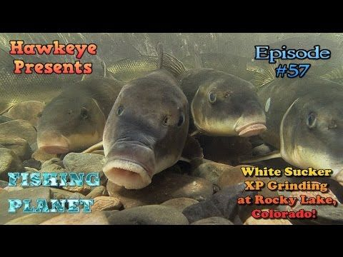 Fishing Planet - Ep  #57: White Sucker XP Grinding at Rocky
