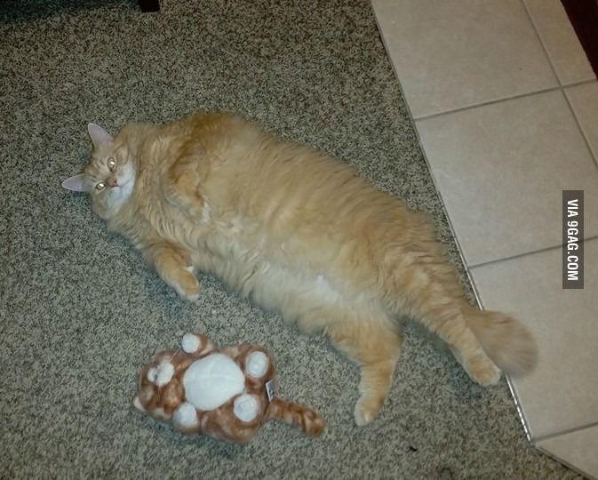 So I found a fat stuffed cat that matches my fat stuffed cat. - 9GAG