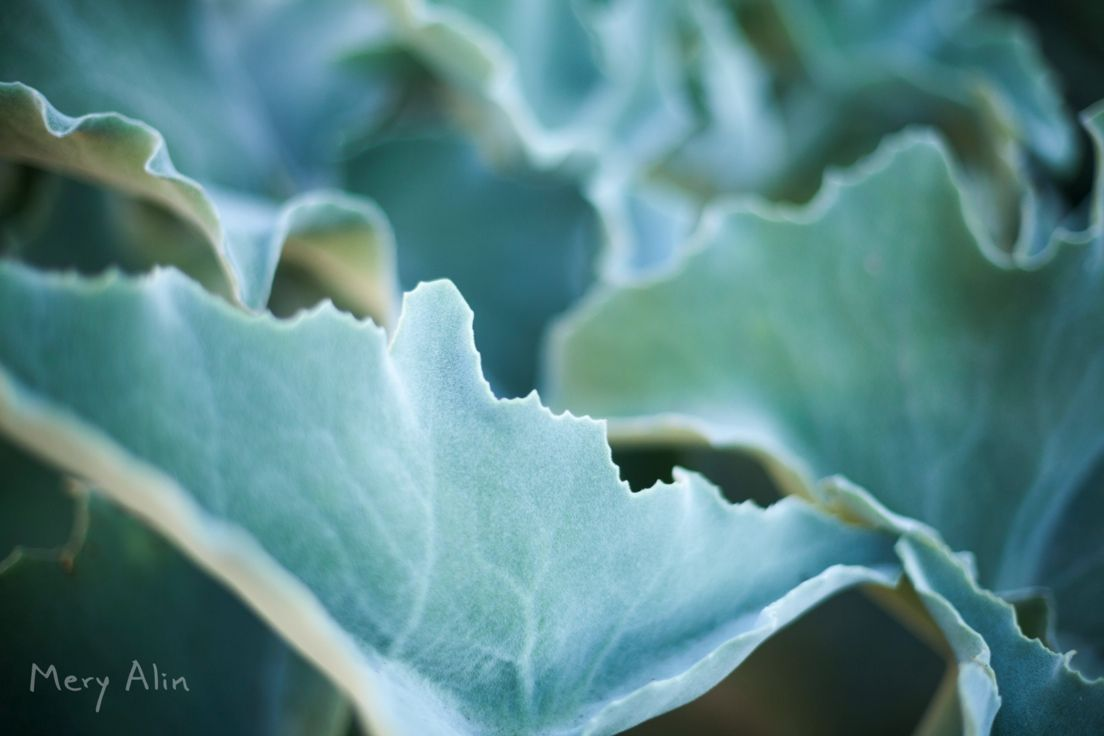 Textura  #Valencia #MeryAlin#Photography #Spain #creativity#creative #proyecto #Agradecimiento #2015 #fotografia #España #blog #proyect #proyecto #grateful #felizdia #agradecida #naturaleza #jardin