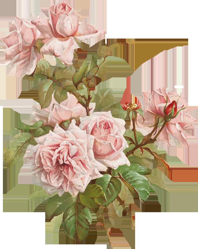 картинки для декупажа розы в большом разрешении это