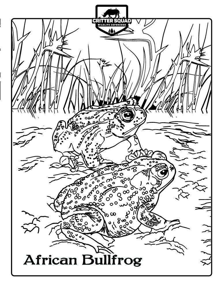 Amphibian Coloring Pages Snake Coloring Pages African Bullfrog