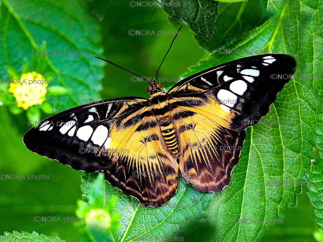 Exotic Butterflies Species