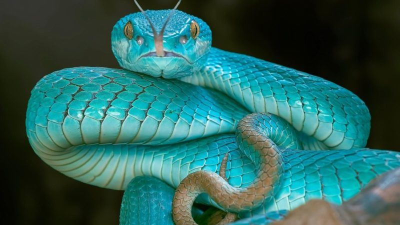 Pin by Marilyn Griswold on Halloween Snake, Animals