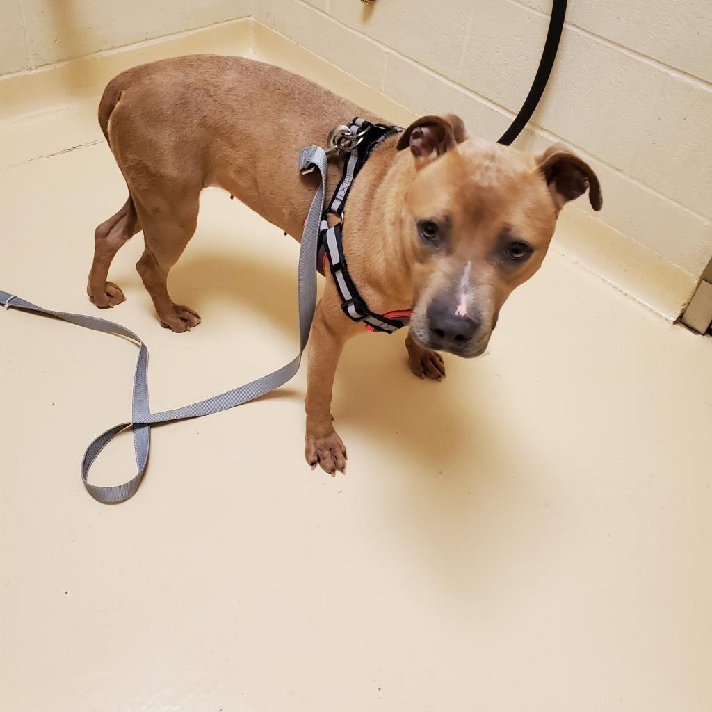 17+ City of stockton animal shelter images