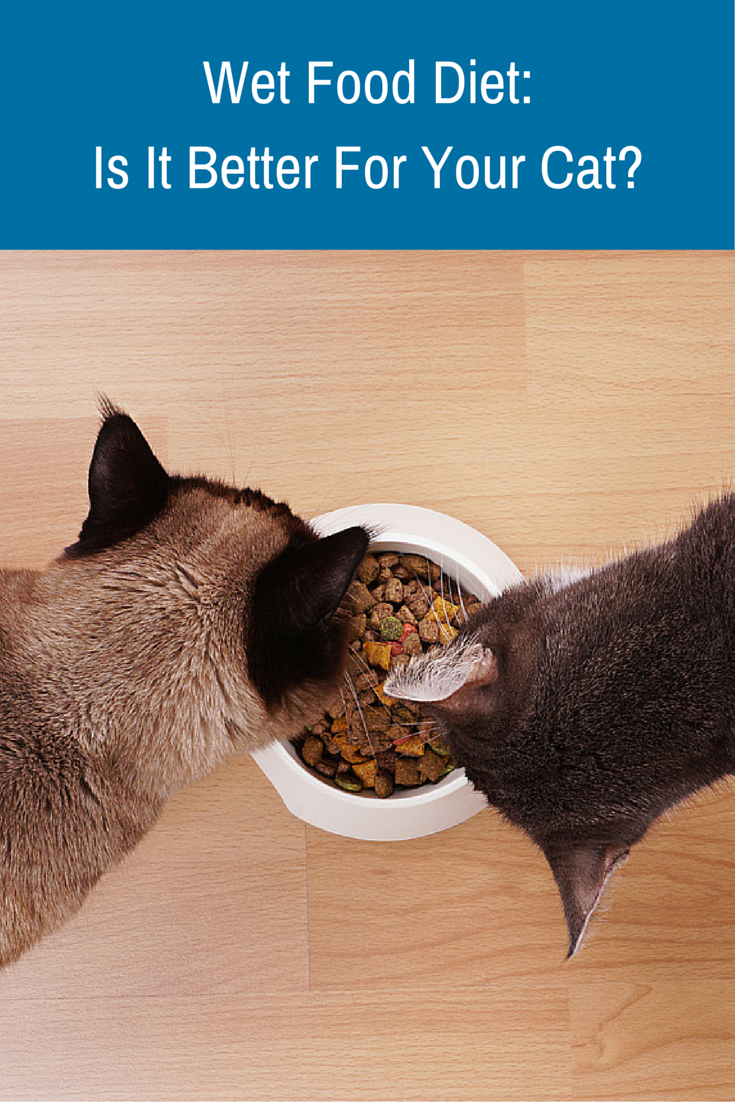 Did you know that an exclusive dry food diet for your cat