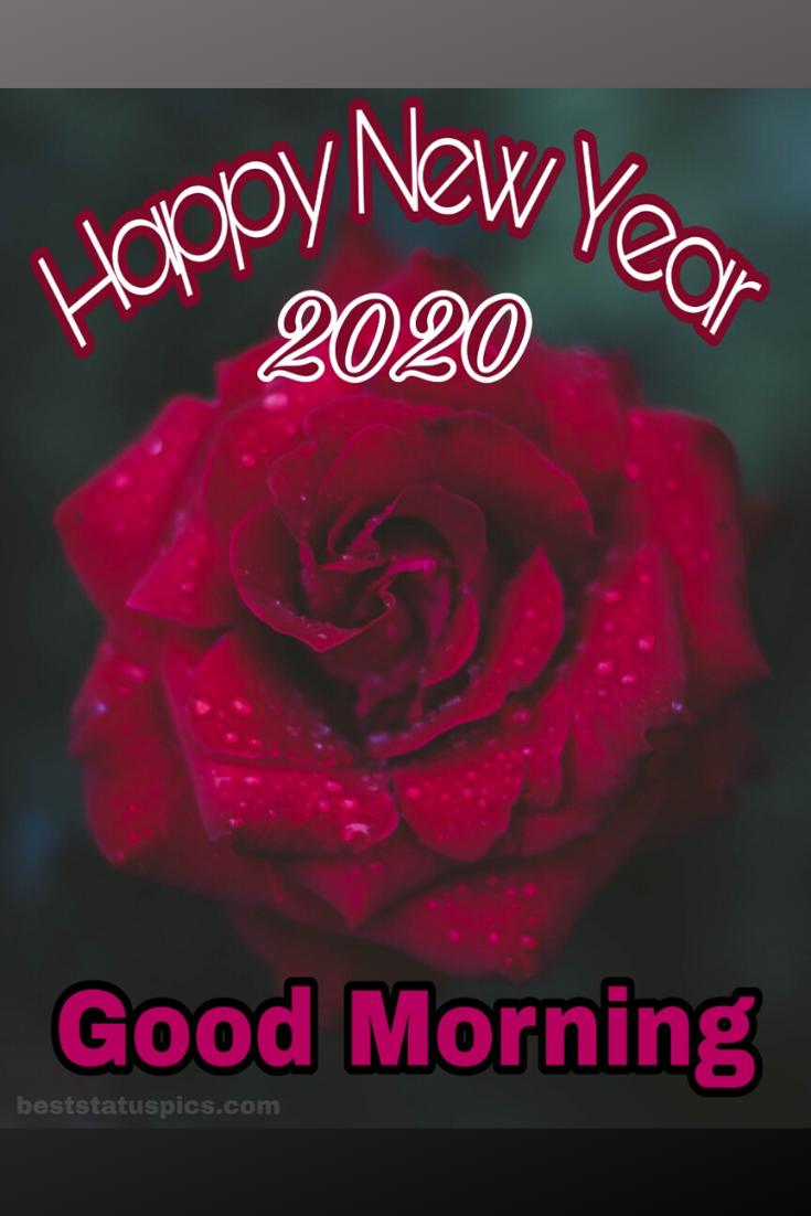 Good Morning Happy New Year 2020 Whatsapp Status Pictures Good Morning Happy Happy New Year Quotes Happy New Year Quotes Funny