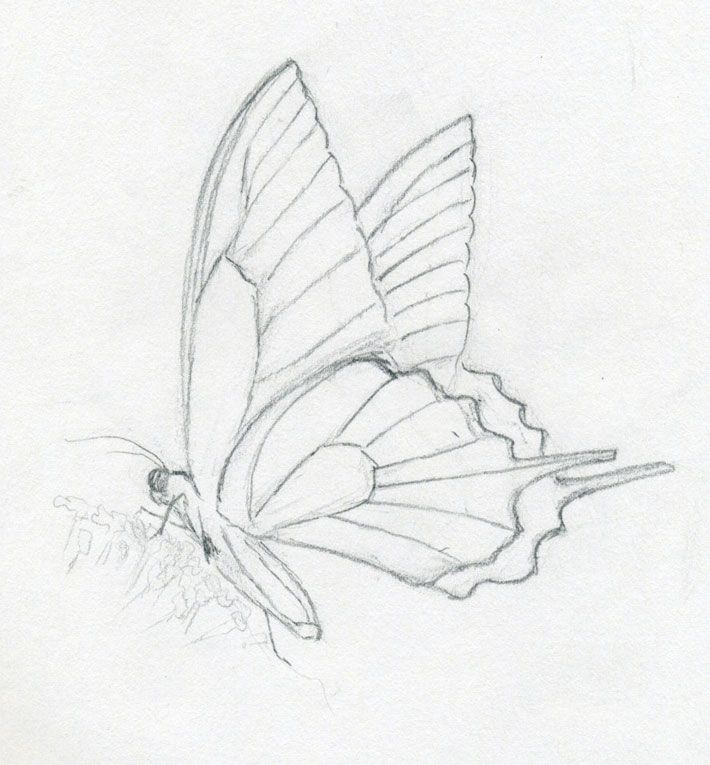 Simple Pencil Sketch Of Butterfly