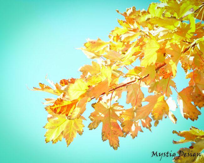 Aqua blue and yellow leaf tree, turquoise sky, orange foliage,fall ...