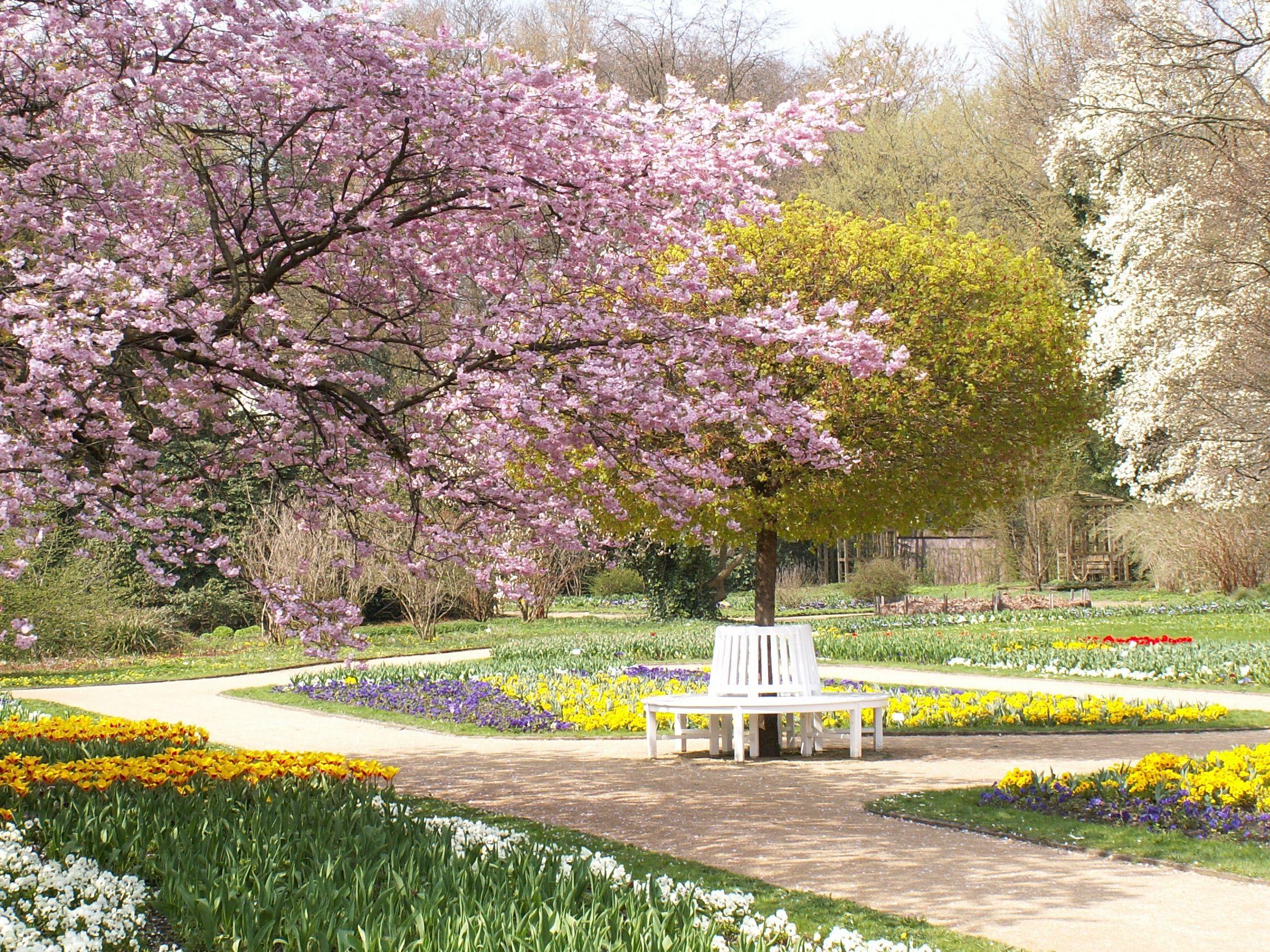 Bluhender Kirschbaum Im Botanischen Garten Gutersloh Botanischer Garten Bluhender Kirschbaum Garten