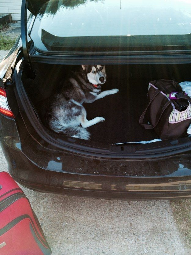 """""""Look, I don't even take up that much space."""" 
