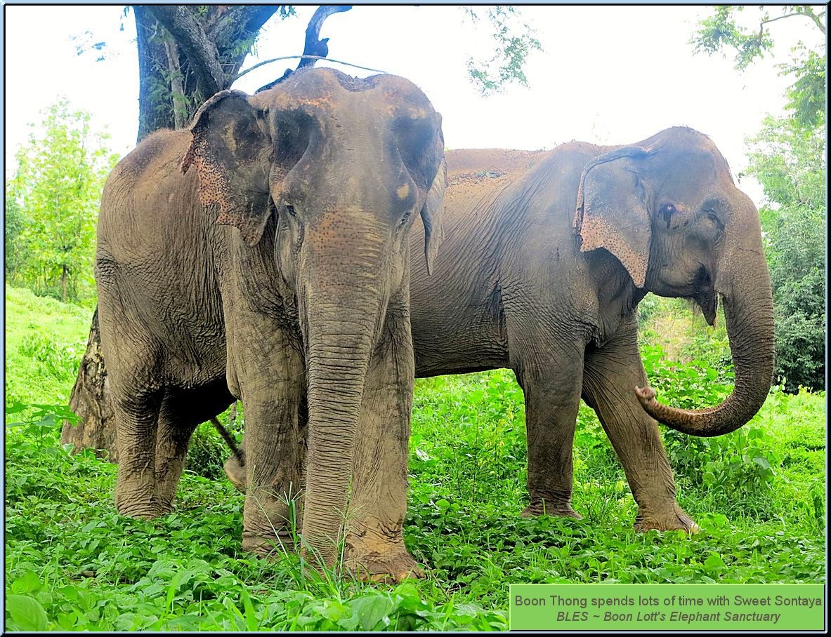 Thank you BLES ~ Boon Lott\'s Elephant Sanctuary for all the work you ...