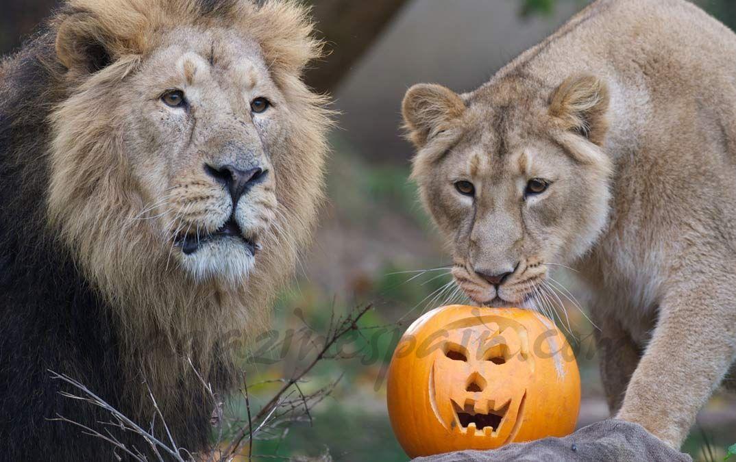 un día de Halloween de lo más salvaje…