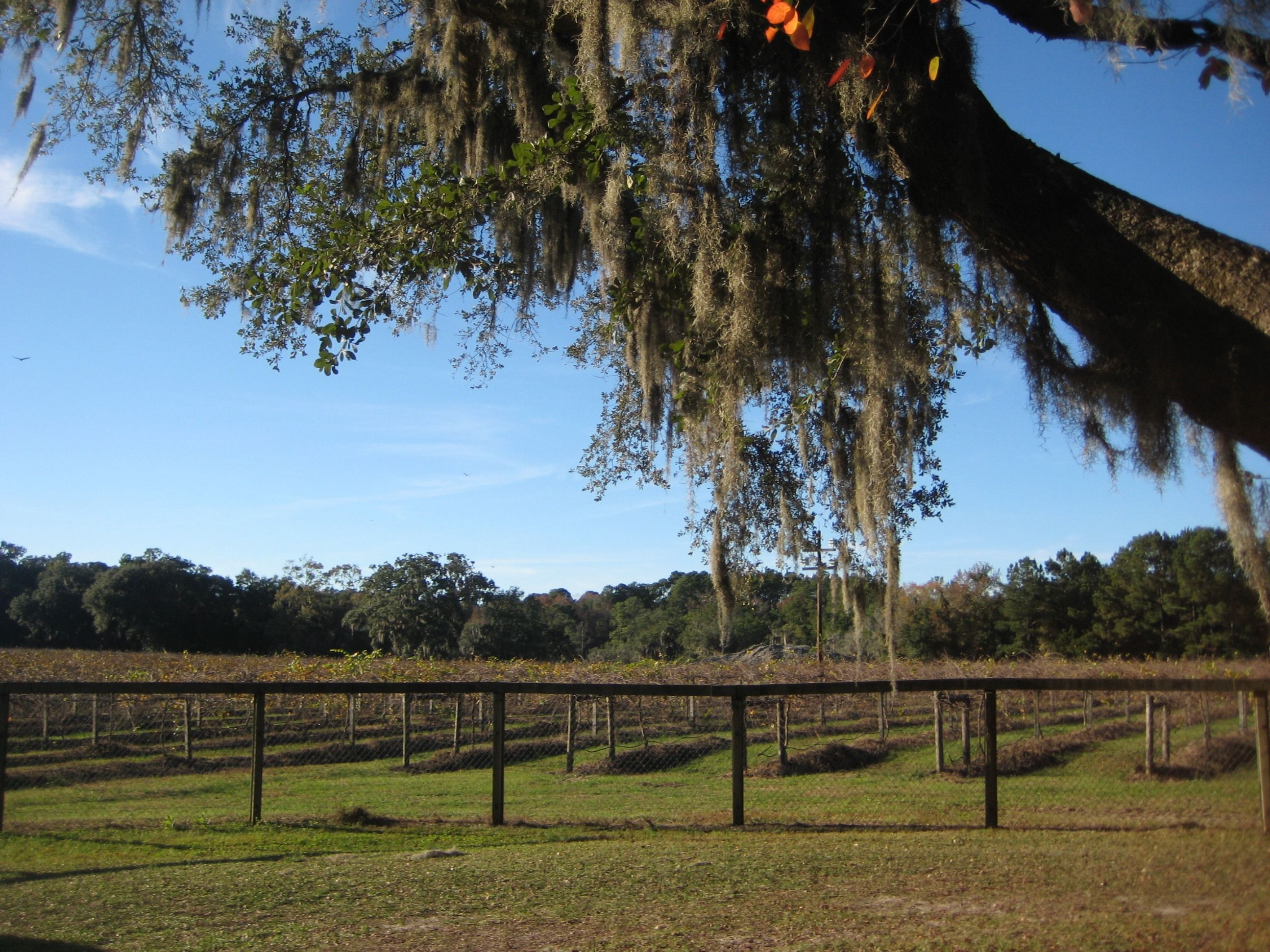 What Blessing Of The Vines Festival When Saturday November 10 12 00 P M 5 00 P M Admission 10 00 Per Car Where Natural Landmarks Vineyard Island