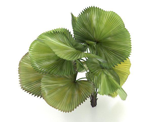 Dwarf areca palm tree 3d model 3ds max files free download