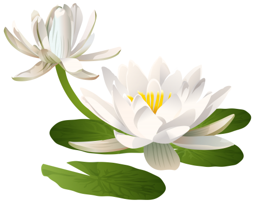 Water Lily PNG Clip Art Image Blumen