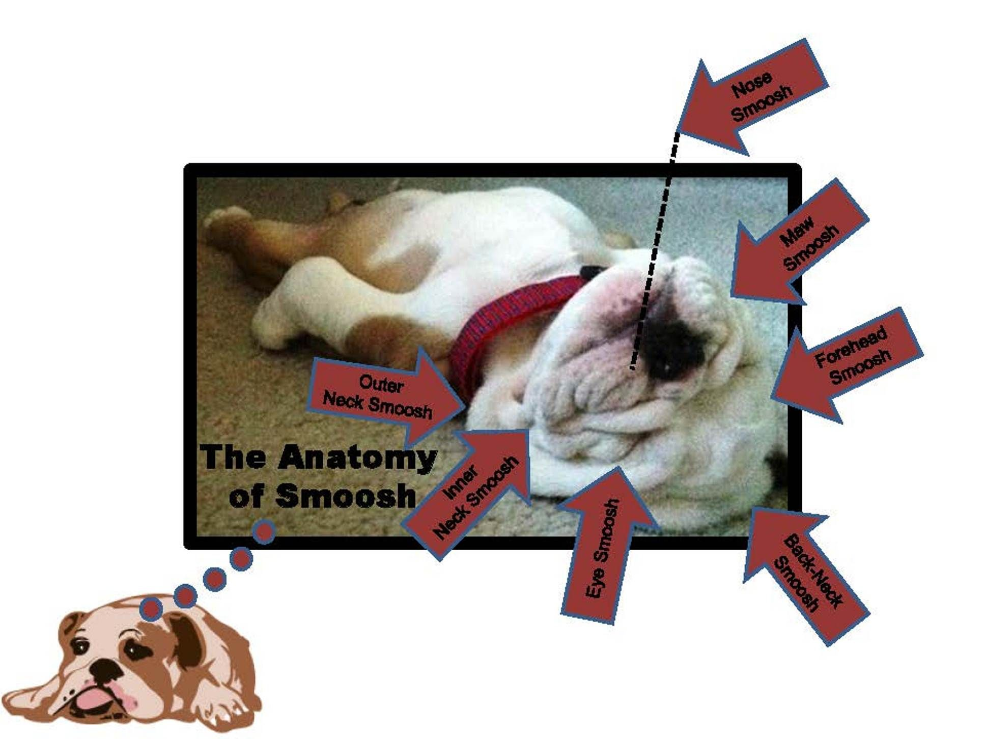 The anatomy/definitions of \