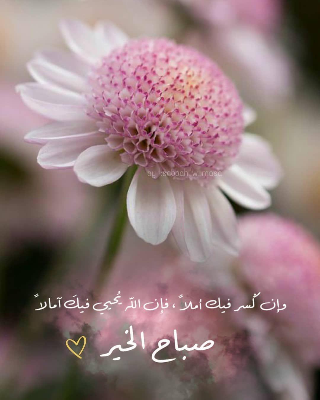 صبح و مساء On Instagram ص باح الخي ر ص Good Evening Greetings Good Morning Flowers Good Morning Beautiful Quotes