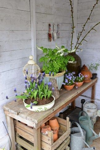 My potting shed is finished. Everything has its place. Even a chair for the old cat. Now to separate my orchids into pots. Feb 2017